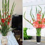 Cách Cắm Hoa Lay ơn Ngày Tết